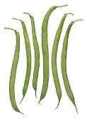 beans---greenjpg_150